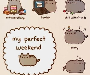 weekend, cat, and perfect image