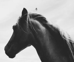 horse, black and white, and animal image