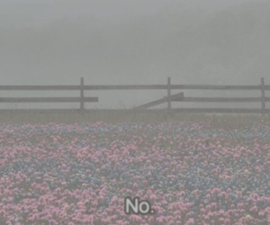 flowers, no, and pale image