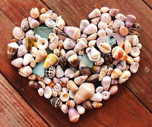heart, shell, and sea image