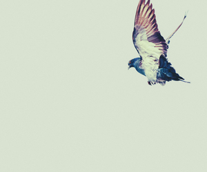 bird, indie, and fly image
