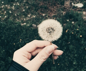flowers, dandelion, and summer image