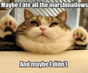 cat, funny, and marshmallow image