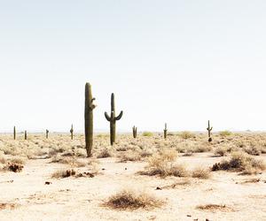 cactus, desert, and white image