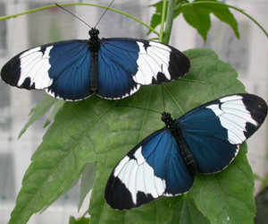 blue, butterfly, and wings image