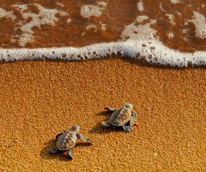 turtle, beach, and sea image