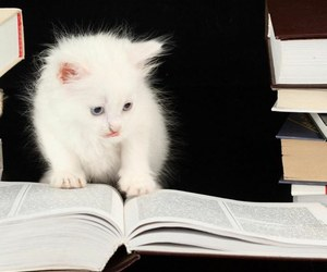 book, cat, and kitten image