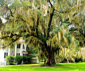 Deep South, tree, and weeping willow image