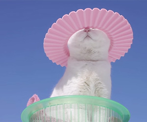 pastel, white, and cat image