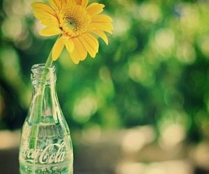flowers and coca cola image