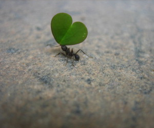 ant, green, and heart image