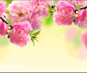 flower, spring, and summer image