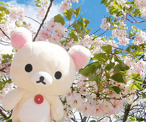 sakura, flowers, and rilakkuma image