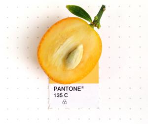fruit and pantone image