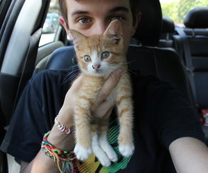 boy, cat, and kitten image
