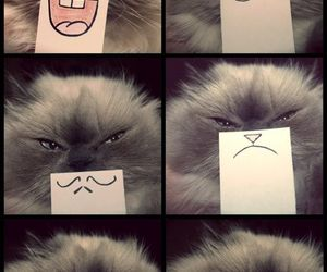cat, funny, and smile image