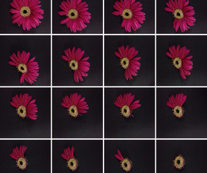 beautiful, daisies, and daisy image