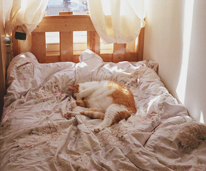 adorable, awn, and bed image