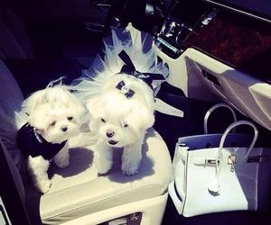 dog, bag, and car image