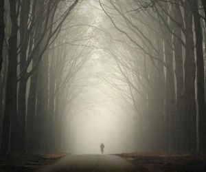 fog, alone, and forest image