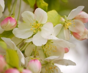 bloom, blossom, and colourful image