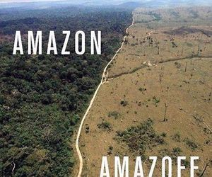 conservation, lol, and deforestation image