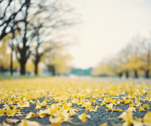 leaves, beautiful, and nature image
