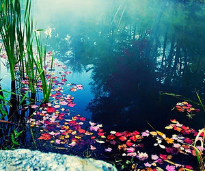 nature, water, and flowers image
