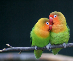 bird, couple, and love image