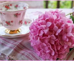 hydrangea, pink, and tea cup image