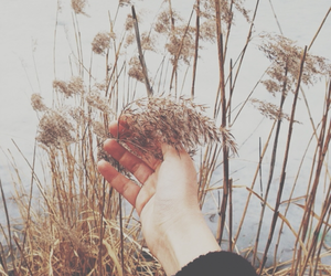 field, spring, and vscocam image