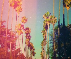 california, summer, and palms image
