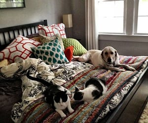 bedroom, cat, and dog image