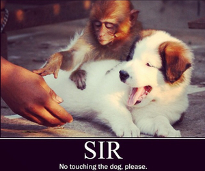 dog, monkey, and funny image