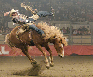 horse and rodeo image