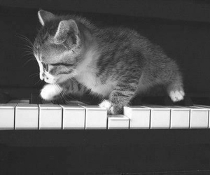 chat and piano image