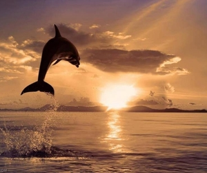 beautiful, dolphin, and sunset image