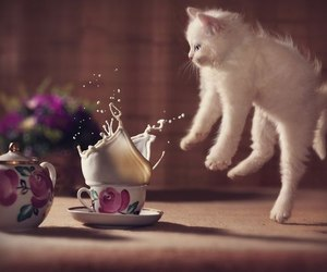 cat, milk, and kitten image