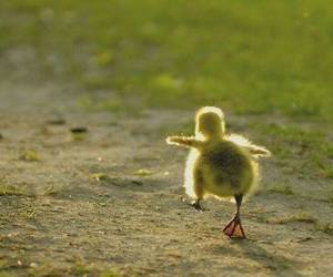 cute, duck, and animal image