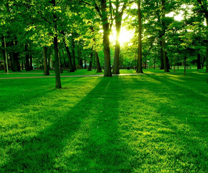 grass, sunlight, and trees image