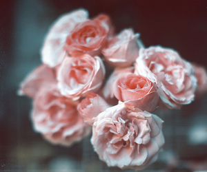 elegant, roses, and flowers image