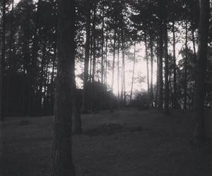 blackandwhite, trees, and woods image