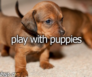 playing, just girly things, and puppies image