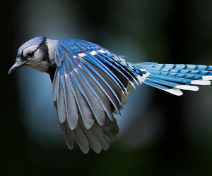 bird, animal, and blue image