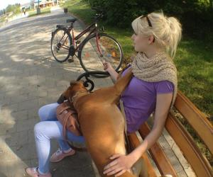 blond, dog, and love image
