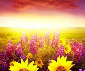 meadow, sunflowers, and sunrise image