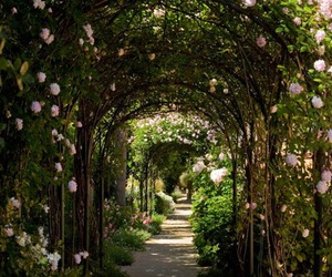 garden, green, and rose image