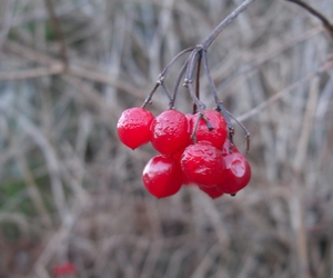 red, berries, and cold image