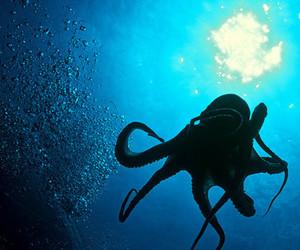 squid image