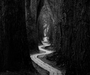 tree, forest, and path image